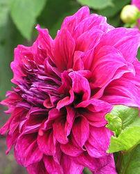 Highlight for Album: Blumen