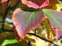 Blätterpoesie in Herbst 3