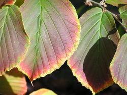 Blätterpoesie in Herbst 2
