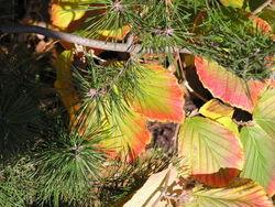 Blätterpoesie in Herbst 1
