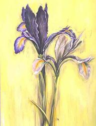 Irisblume/2004