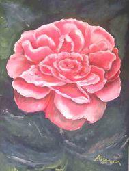Rose1/2003