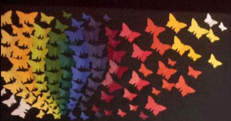 Schmetterlingsbild-4-schwarz-bunt.