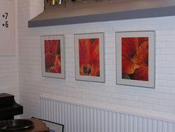 Bilder 1,2,3.Tulpen von Rohloffs Garten