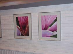 Bilder 4,5 Magnolien aus Glinde