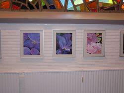 Bilder 6,7,8 Hortensien aus der Gärtnerei Diesing und Apfelblüte